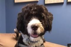 FHPR-Mascot-Cookie-Horwitz